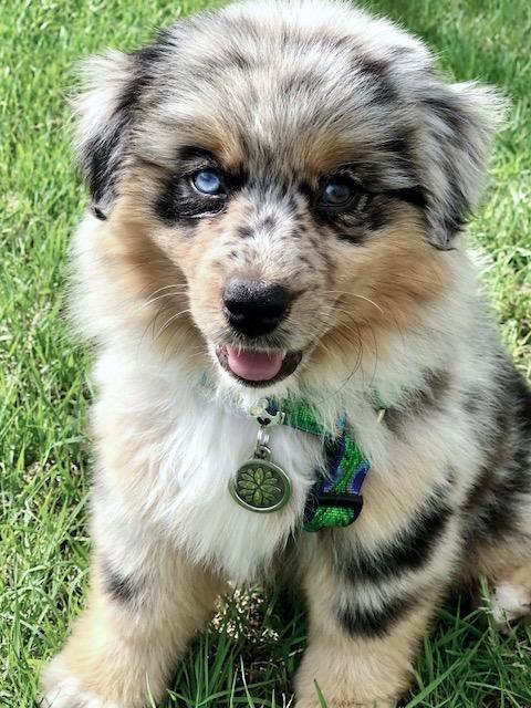 indestructible pet tag